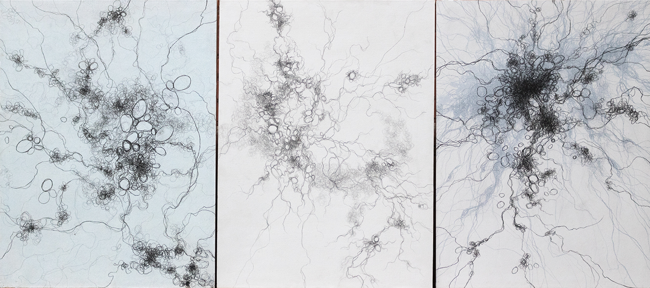 "Nature Drawing Triptych, 3@ 24"" x 18"", graphite"